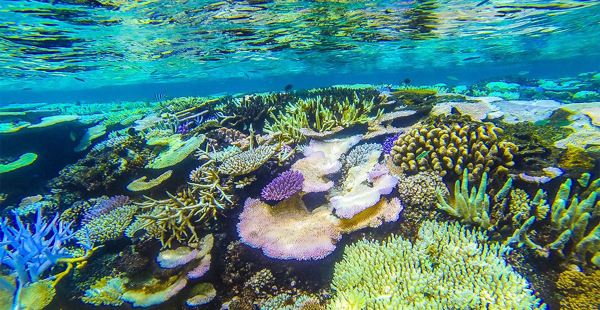 UE1071_fiji_Matangi-Snorkeling-1