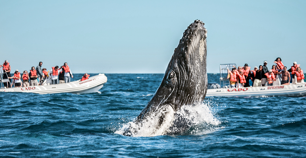 16755_CABO_AA_FITURCA-whale3