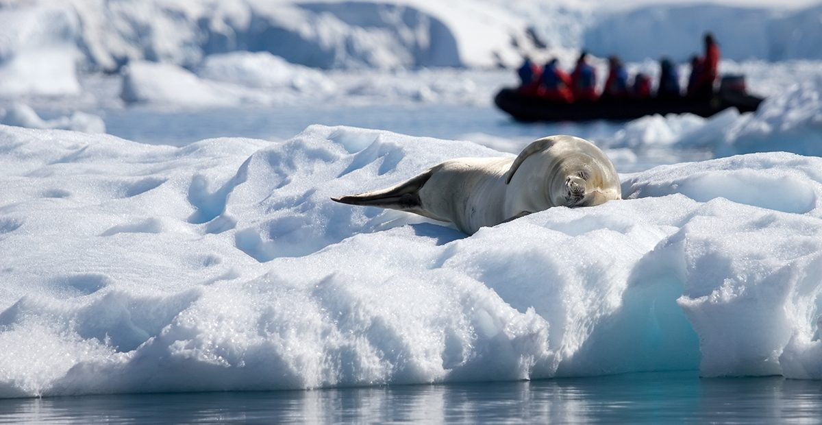 seal life in Antarctica