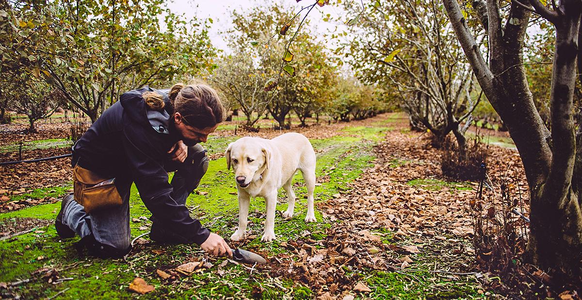 Truffle Hunting, Manjimup