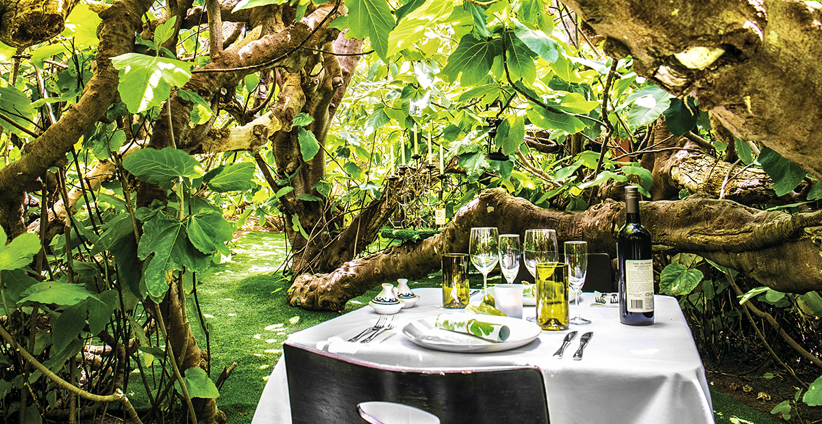 Enchanted Fig Tree Lunch - LifeTime Private Retreats