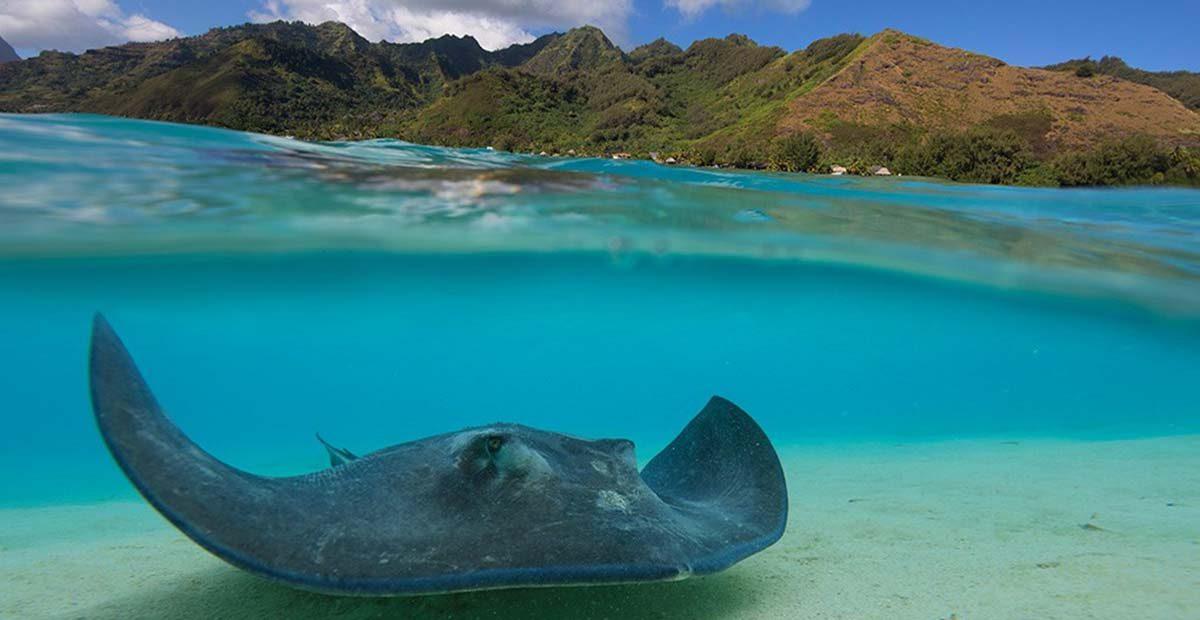 Tahiti2_resize
