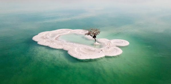 Aerial image of a Bare tree on a salt deposit in the Dead Sea